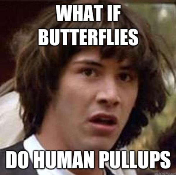 butterflies-human-pull-ups